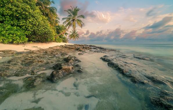 Картинка пляж, лето, тропики, пальмы, Море