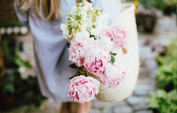 Картинка цветы, розовые, пионы