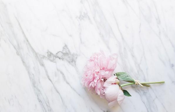 Картинка цветы, букет, мрамор, pink, flowers, пионы, peonies, tender, marble
