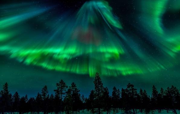 Картинка лес, небо, звезды, ночь, северное сияние