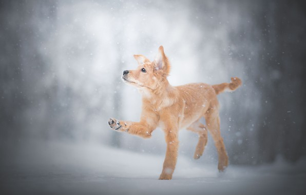 Картинка зима, снег, лапа, щенок, пёсик