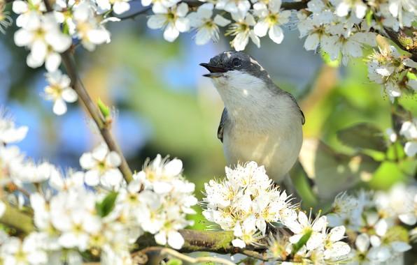 Картинка цветы, природа, дерево, птица, весна