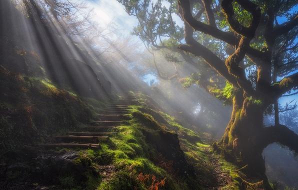 Картинка лучи, свет, природа, туман, дерево, тропа, утро, ступени, дымка