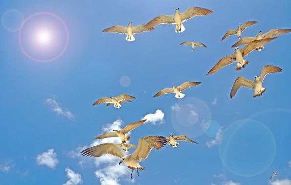 Image result for фото полет птицы