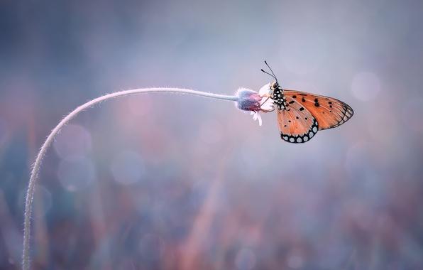 Картинка цветок, макро, фон, бабочка, боке