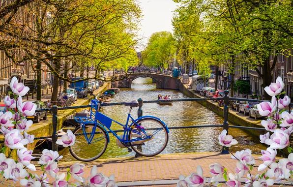 Картинка мост, велосипед, река, весна, Амстердам, цветение, bridge, blossom, Amsterdam, flowers, old, spring, buildings, Netherlands, canal