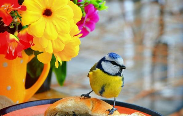 Картинка Птичка, Цветочки, Flowers, Bird
