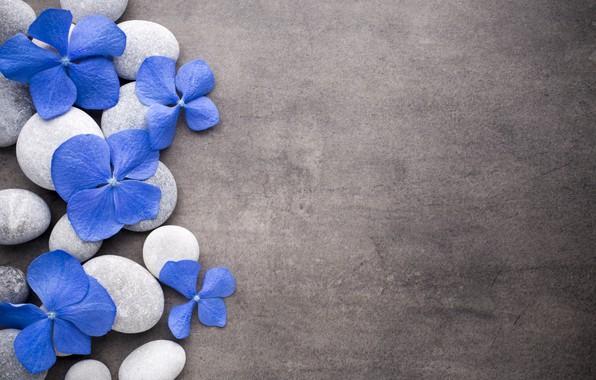 Картинка цветы, камни, blue, flowers, stones, spa, zen