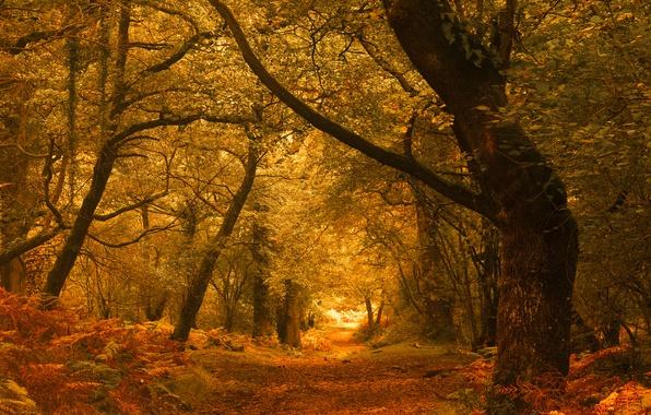 Картинка осень, лес, деревья, Англия, England, Exmoor, Эксмур, Horner Woods