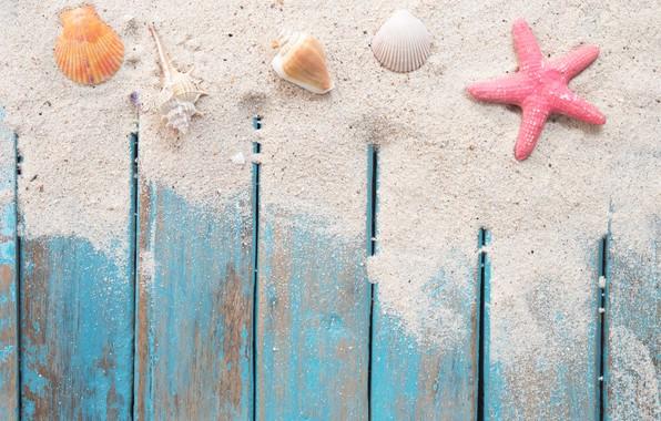 Картинка песок, пляж, звезда, ракушки, summer, beach, wood, sand, marine, starfish, seashells