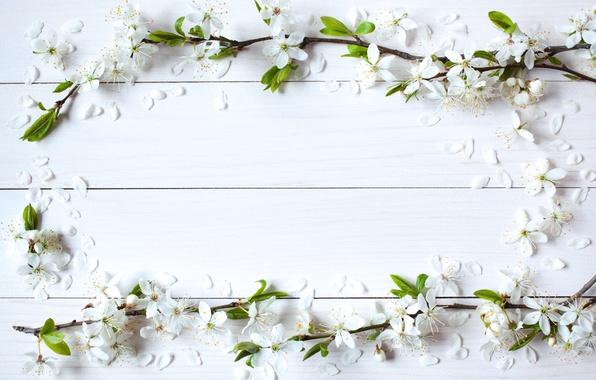 Картинка цветы, фон, весна, яблоня, wood, blossom, flowers, spring, frame