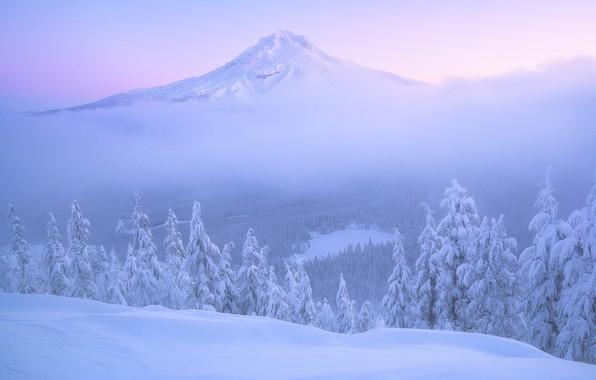Картинка зима, лес, снег, рассвет, гора, утро, ели, Орегон, панорама, сугробы, Oregon, Mount Hood, Каскадные горы, …