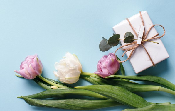 Картинка цветы, подарок, тюльпаны, white, fresh, pink, flowers, beautiful, tulips, gift, spring, tender