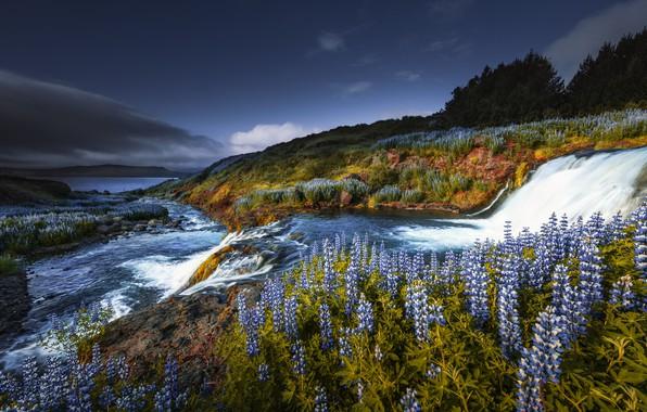 Картинка цветы, водопад, каскад, Исландия, люпины