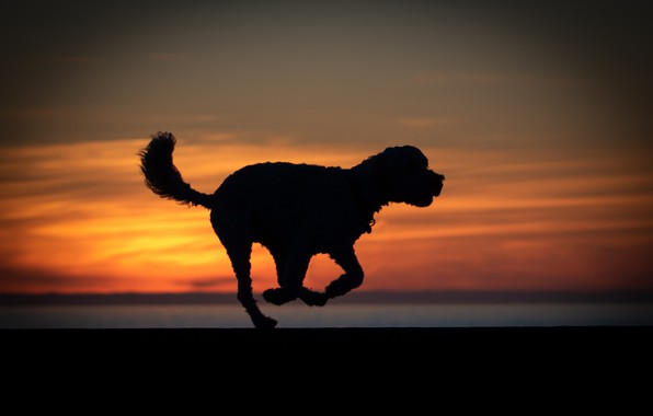 Картинка закат, собака, силуэт