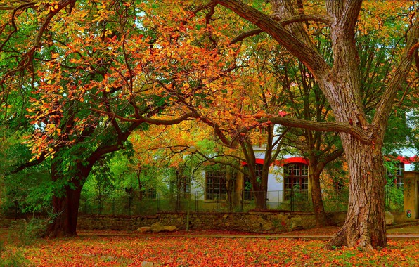 Картинка Осень, Деревья, Fall, Листва, Autumn, Colors, Leaves