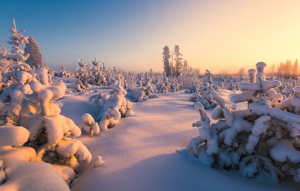 Картинка зима, лес, снег, Финляндия
