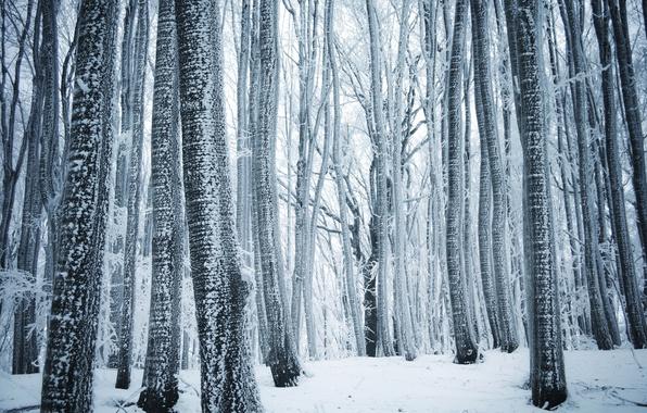 Картинка Природа, Зима, Деревья, Снег, Лес