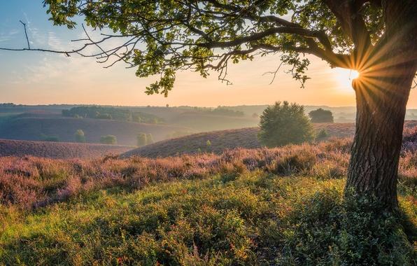 Картинка рассвет, утро, Нидерланды, Голландия, Veluwezoom National Park, Posbank