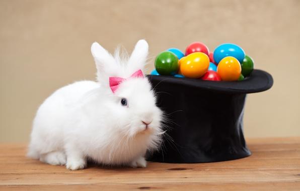 Картинка белый, праздник, яйца, шляпа, colorful, кролик, Пасха, holidays, крашенные, rabbit, цилиндр, spring, Easter, eggs