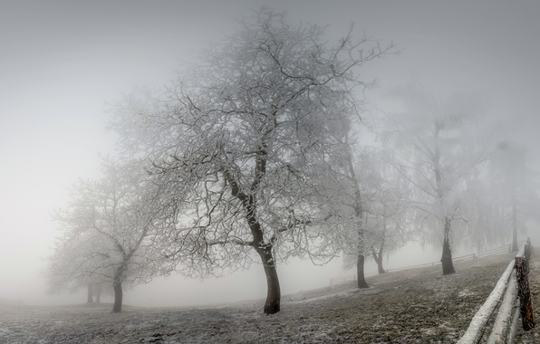 Картинка зима, иней, туман
