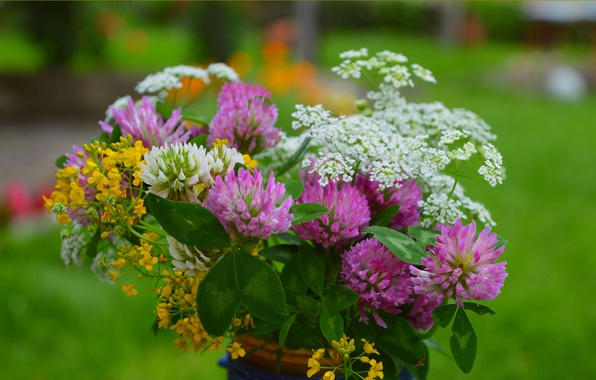 Картинка Цветы, Весна, клевер, Flowers