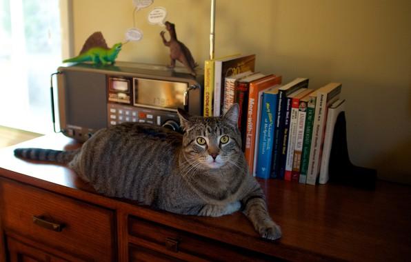 Картинка кошка, кот, взгляд, уют, стол, серый, стена, игрушки, мебель, книги, лапы, окно, лежит, динозавры, шкаф, ...
