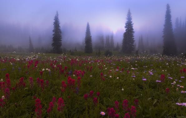 Картинка лес, цветы, природа, туман, луг, дымка
