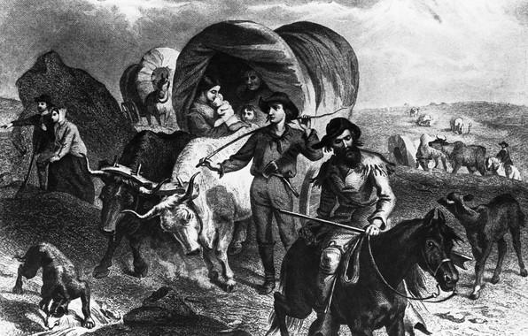 Картинка люди, собака, повозка, быки, буйволы, donner party, группа американских пионеров