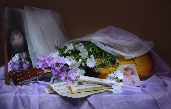 Картинка девушка, цветы, ноты, гитара, портрет, вуаль