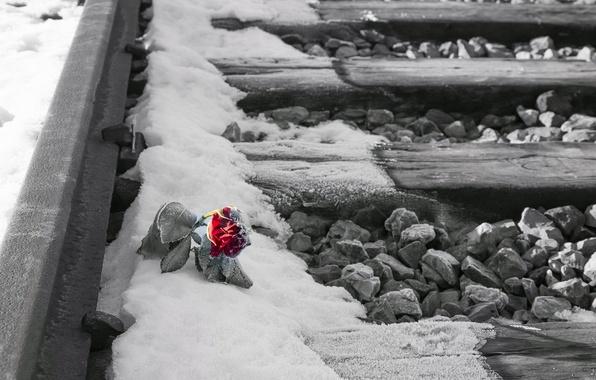 Картинка цветок, снег, роза, железная дорога