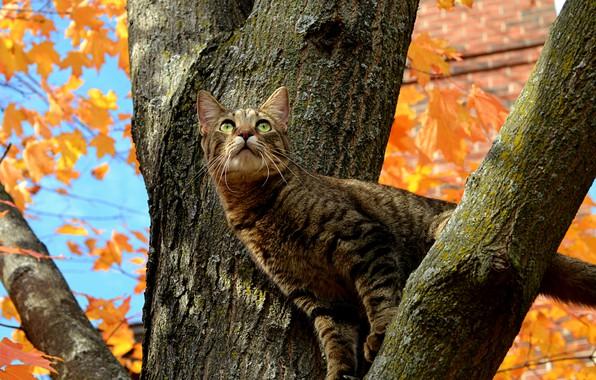 Картинка Дерево, Кошка, Осень, Fall, Tree, Autumn, Cat