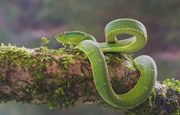 Картинка мох, змея, зелёный