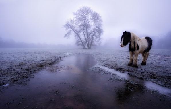 Картинка поле, туман, конь