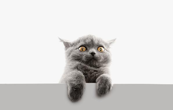 Картинка глаза, кот, взгляд, лапы, безумный