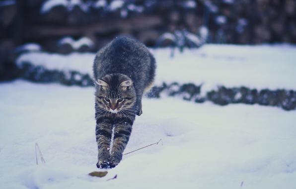 Картинка зима, кошка, снег, прыжок