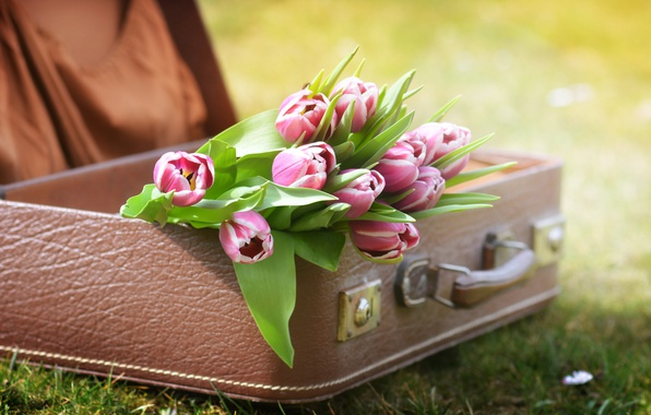 Картинка трава, цветы, природа, тюльпаны, чемодан
