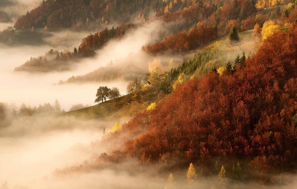 Картинка осень, лес, деревья, природа, туман, утро