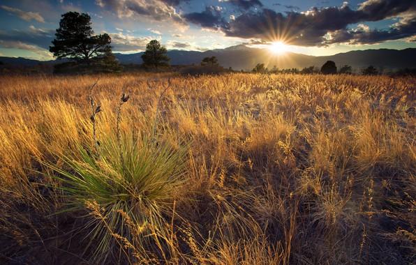 Картинка Солнце, Поле, Трава