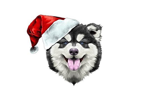 Картинка счастье, праздник, шапка, новый год, собака, шляпа, new year, happy, dog, 2018, santa claus