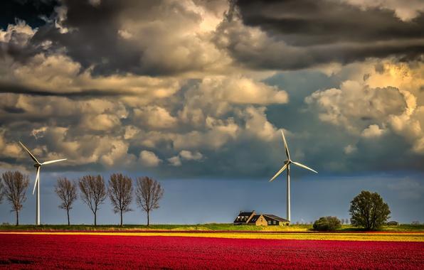 Картинка поле, вечер, ветряки