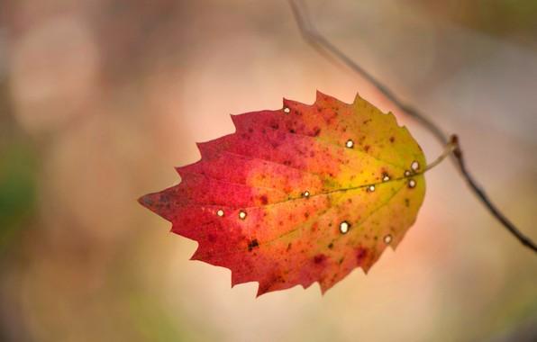 Картинка осень, лист, краски, багрянец