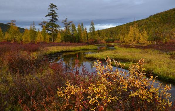 Картинка осень, Колыма, ручей Неведомый