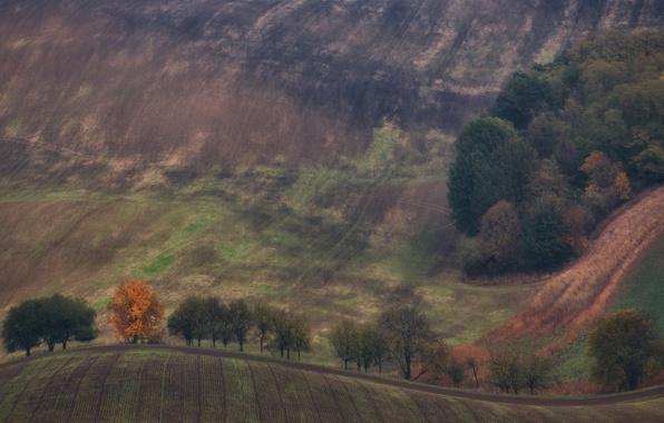 Картинка осень, деревья, природа, холмы, поля