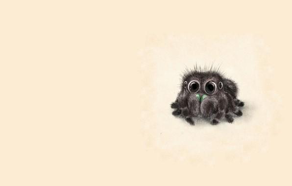 Картинка глазки, малыш, арт, пушистик, детская, паучок, Sydney Hanson