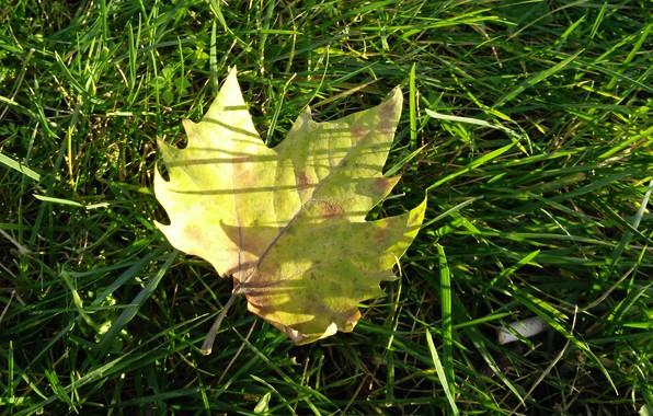 Картинка осень, трава, макро, лист, grass, autumn, macro, leav, fall