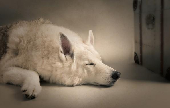 Картинка сон, собака, спящая собака