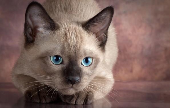 Картинка глаза, взгляд, животное, детёныш, котёнок, Anna Verzina, Анна Верзина