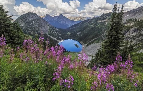 Картинка цветы, горы, озеро, луг