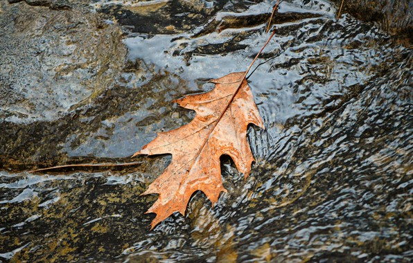 Картинка Вода, Поток, Осень, Листик, Fall, Water, Autumn, Leaf, Flow